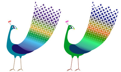 peacock isolated on white background