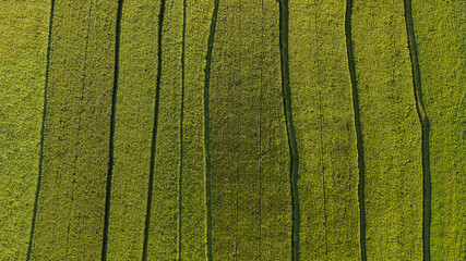 Foto auf AluDibond Reisfelder Aerial directly above view of rice fields
