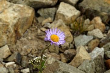 Exploratory Flower