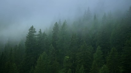 Wall Mural - Scenic Coniferous Forest Covered by Late Afternoon Stormy Clouds.