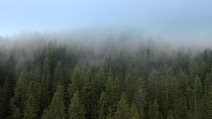 Wall Mural - Aerial Footage of the Conifers Forest and the Clouds Passing By. Alpine Weather.