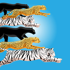 Illustration of jumping panthers, tigers and cheetahs on a sunny tropical background.