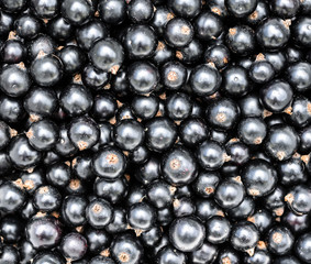 Black currant. Top view. Heap of black currant close up backgraund. Summer berries.