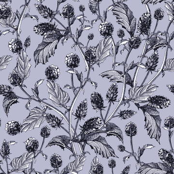 Psoralea herb seamless pattern from  flowers with leaves. Hand drawn bakuchiol,  organic healthy herb (natural retinol) with black ink, isolated  on light grey background.