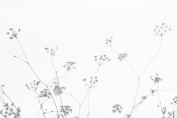 Gray shadows of the flowers on a white wall. Abstract neutral nature concept background. Space for text. Blurred, defocused.