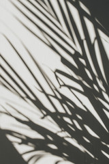 Neutral floral composition with tropical palm branch silhouette. Flat lay, top view florist minimal...