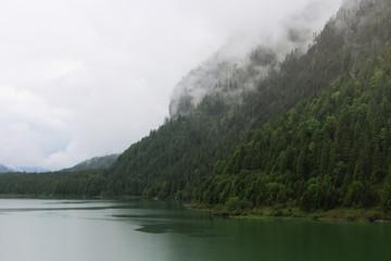 Wall Mural - Berg und Wald im Nebel