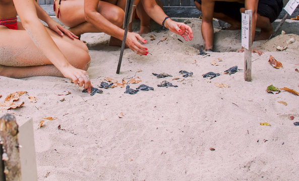 group of newborn baby sea turtles get out of the sand