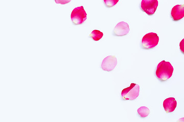 Rose petals isolated on white.
