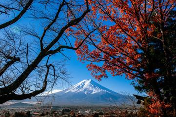 Snow covered Mount Fuji and red maple view from Chureito Pagoda park in Shimoyoshida - Fujiyoshida