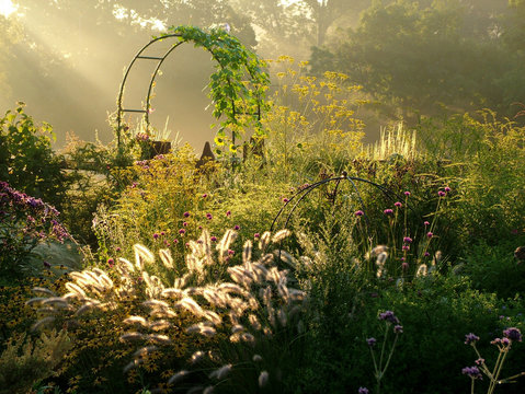 Horizontal image of a country garden in fall (autumn) with flowers, ornamental grasses, an arbor (arch), and fence lit by sunbeams from sunrise