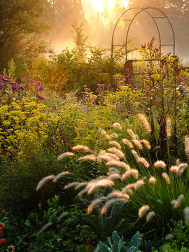 Large country garden with flowers and ornamental grasses and an arbor (arch) backlit by morning sun, with the fluffy heads of fountain grass (Pennisetum alopecuroides) in the foreground