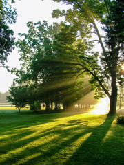 Vertical image of sunbeams shining through large deciduous trees at dawn on a hazy summer morning