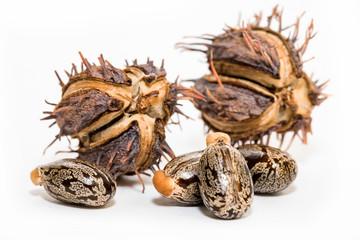 Castor oil seeds on white background