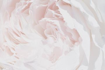 One huge, large paper decorative flower, decor