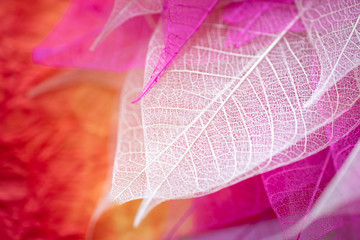 Closeup nature view of transparent skeleton leaf on beautiful color with copy space using as background or wallpaper concept.