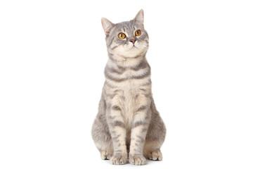 Fototapeta Beautiful cat sitting on white background