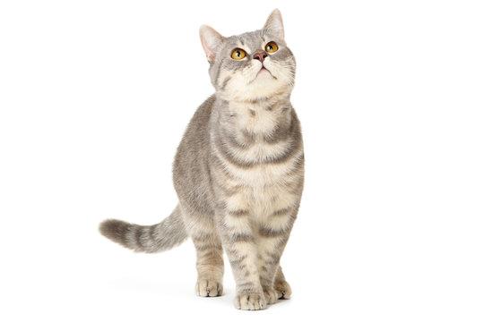 Beautiful cat on white background