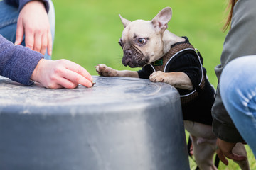 women trains with a french bulldog