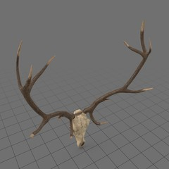 Animal skull with antlers