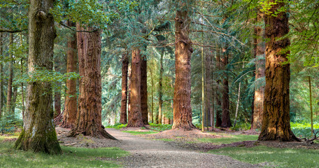 Long Trees walk in New Forest national park