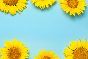 Fotomurales - Frame from beautiful fresh sunflowers on blue background. Flat lay, top view, copy space. Autumn or summer Concept, harvest time, agriculture. Sunflower natural background. Flower card