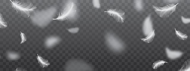 White Flying Bird Feathers Pattern on Dark Background