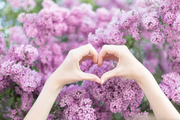 Hands of a young woman in heart shape in front of a lilac shrub