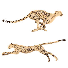 Set of two running cheetahs isolated on a white background. Vector graphics.