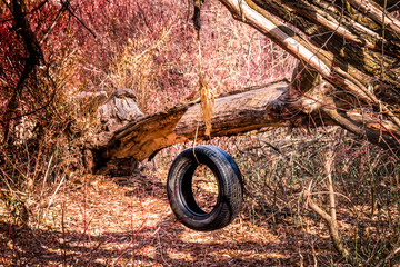 Tire Swing in the Middle of the Woods