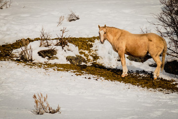 Blonde Horse Stands In Waste
