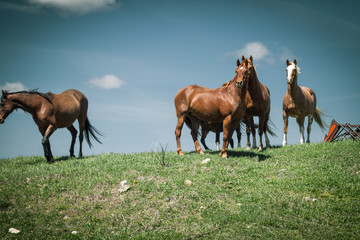 Horses Standing Against a Blue Sky