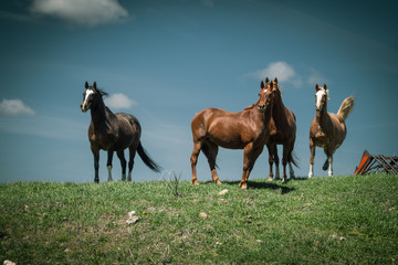 Horses Standing on a Hill Under a Blue Sky