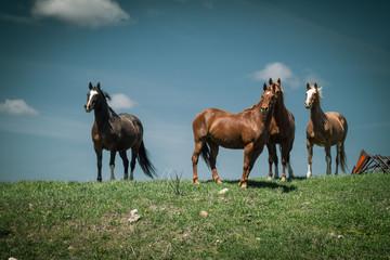 Horses on the Grassy Knoll