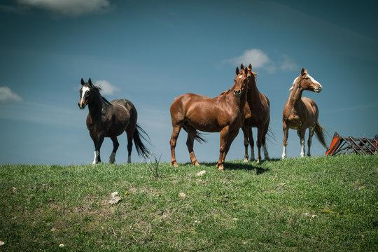 Four Horses Standing Against a Blue Sky