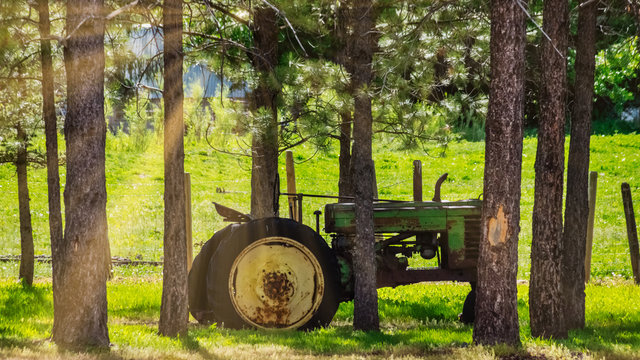 Vintage Tractor in the Trees