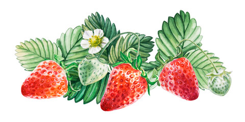 Watercolor red juicy strawberry with leaves. Food background, painted bright composition. Hand drawn food illustration. Fruit print. Summer sweet fruits and berries.