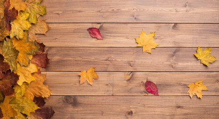 Wall Mural - Seasonal autumn background. Frame of colorful maple leaves over grey.