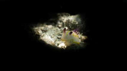 Fotografia subaquea a trieste