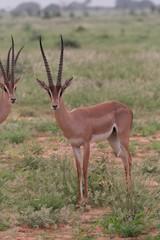 Alcuni scatti del parco nazionale zavo est in kenya