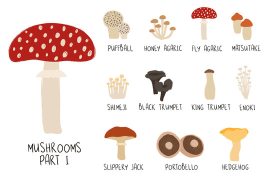 Collection Or Colorful Isolated Mushrooms.
