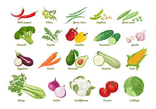 Set of vector icons vegetables. Chili, olive, bean, soybean, peas, broccoli, arugula, paprika, cucumber, garlic, eggplant, carrot, avocado, zucchini, corn, celery, onion, cauliflower, tomato, cabbage.
