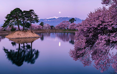 Photo sur Plexiglas Lilas cherry blossom with full moon