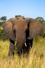 Poster Olifant Elephant up close