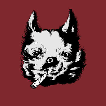 Vector hand drawn illustration of chihuahua isolated.