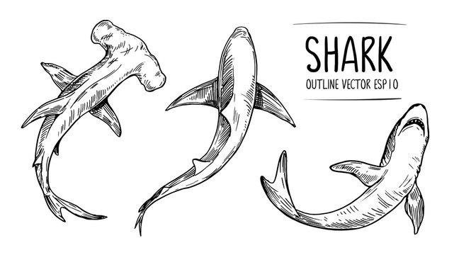 Sketch of shark. Hand drawn illustration converted to vector. Outline with transparent background