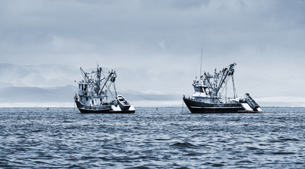 fishing boats in the bay