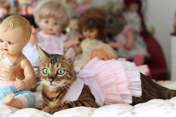 Cat in a princess dress surrounded by dolls