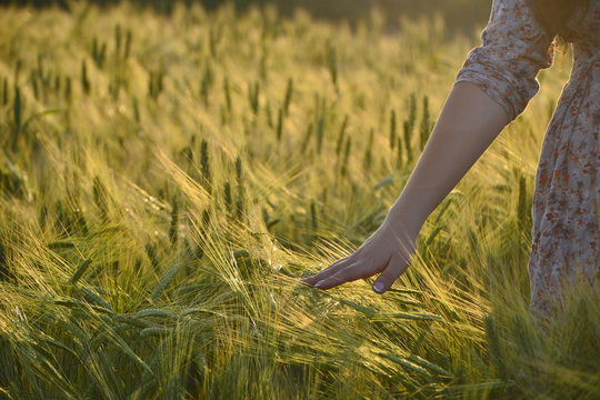girl's hand touching wheat in a field at sunset