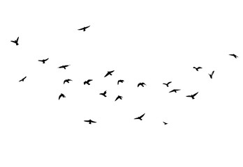 A flock of flying birds. Vector illustration Fotobehang